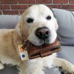 Limburskie gminy nie rezygnują z podatku za psy